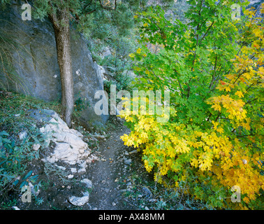 McKittrick Canyon with fall colors Guadalupe Mountains National Park Texas USA November 2005 - Stock Photo