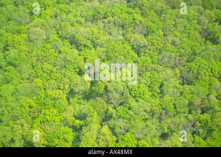 Aerial view of woodlands consisting of Deciduous and Coniferous Trees - Stock Photo
