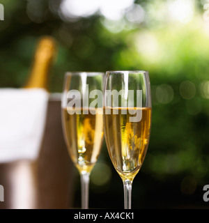 Champagne in Champagne Flutes - Stock Photo