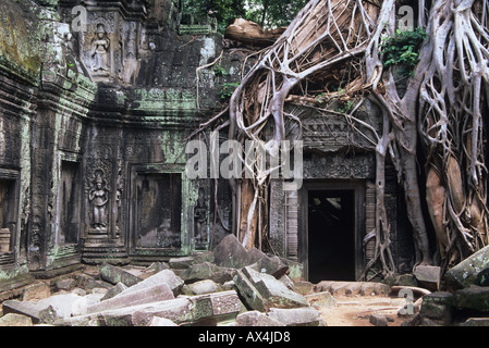 Ta Prohm is a temple at Angkor in the Siem Reap region of Cambodia famous for the trees growing out of the ruins - Stock Photo