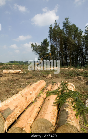 A stack of cut timber logs lodge pole pine trees at a for Pine tree timber