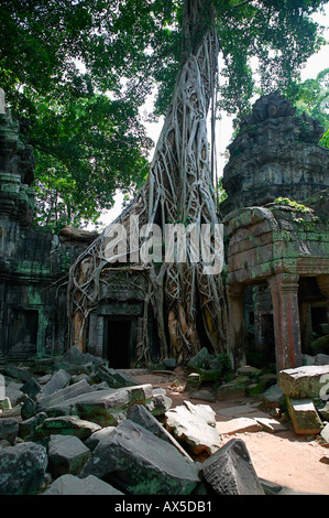 Ta Phrom Jungle Temple Temples of Angkor Siem Reap Cambodia Asia - Stock Photo