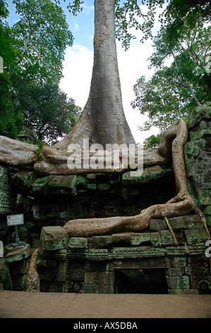 Ta Phrom Jungle Temple Temples of Angkor Siem Reap Cambodia Asia