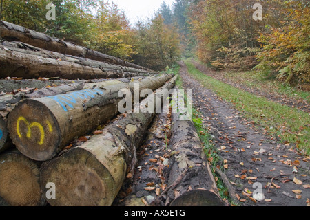 piles of tree logs in forest - Stock Photo