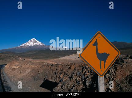 Llama crossing sign, Sajama Volcano in the background, Altiplano, Oruro Department, Bolivia, South America - Stock Photo
