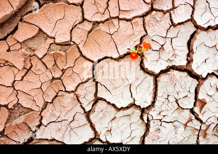 Dried-up riverbed, Grand Staircase National Monument, Utah, USA - Stock Photo