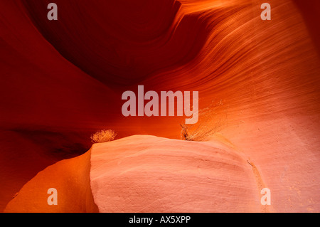 Tumbleweed (Salsola tragus) resting on a sandstone formation in Lower Antelope Canyon, Slot Canyon, Arizona, USA, - Stock Photo
