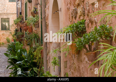 Flowers decorating a street in Valldemossa, Majorca, Balearic Islands, Spain, Europe - Stock Photo