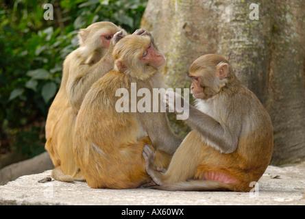 Monkey at Swayambunath temple, Kathmandu, Nepal - Stock Photo