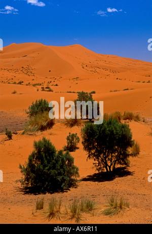 sand dune, sand dunes, Erg Chebbi, Sahara Desert, sunrise, dawn, daybreak, landscape, Merzouga, Errachidia Province, - Stock Photo