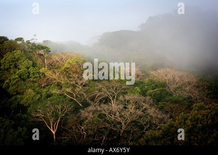 Misty rainforest at sunrise in Soberania national park, Republic of Panama - Stock Photo