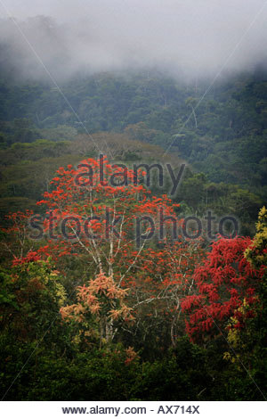 Misty rainforest near Cana field station in the Darien national park, Republic of Panama. - Stock Photo