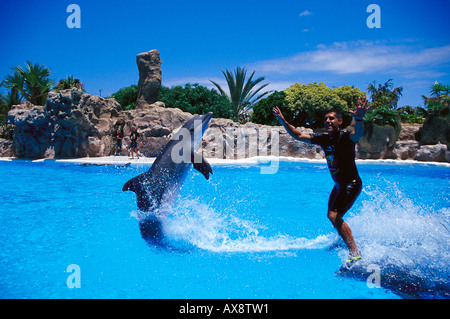 Dolphin show, Loro Parque, Puerto de la Cruz, Tenerife Canary Islands, Spain - Stock Photo