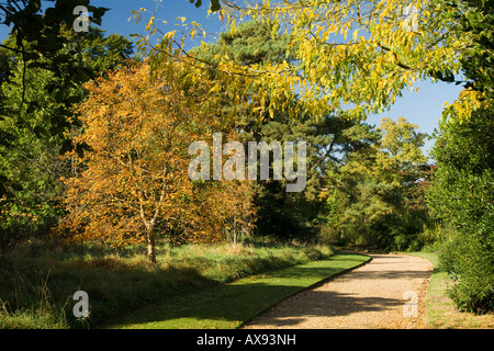 Gleditsia triacanthus Honey Locust above and Tilia mongolica Mongolian Lime left - Stock Photo
