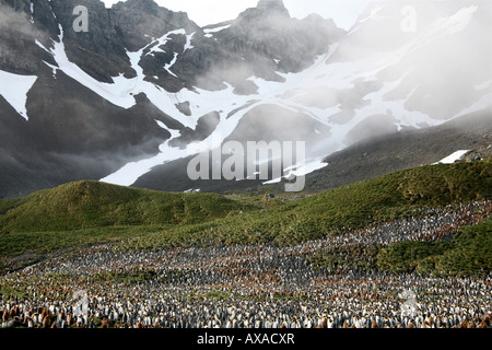 large colony of penguins with stark rocky peaks and grassy hills - Stock Photo