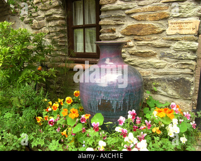 pansy violets in garden corner near window - Stock Photo