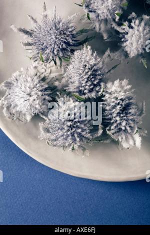 Globe thistle (Echinops) on plate, close-up - Stock Photo