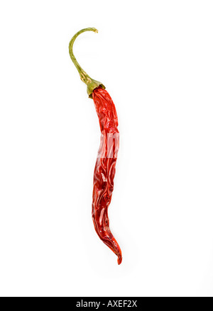 Single red sun dried chilli pepper - Stock Photo