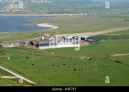 Brean near Burnham on Sea semi aerial view of farm buildings and cattle grazing with river Axe beyond - Stock Photo
