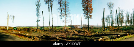 Cut logs in beech forest of Tron ais Allier botany Fagus substance 03 Allier area areas Autumn Auvergne Beech Beeches - Stock Photo