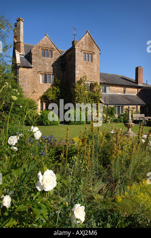 ROSE ICEBERG AT MANOR FARM SOMERSET BY GARDEN DESIGNER SIMON JOHNSON UK - Stock Photo