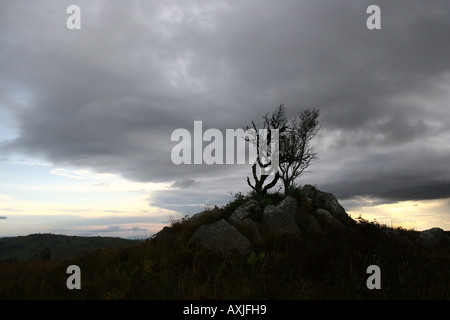 Dead tree against dramatis stormy sky - Stock Photo