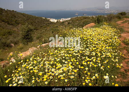 Yellow wild spring flowers on green nature reserve conservation area above Saronida in Attica or Atiki Greece - Stock Photo