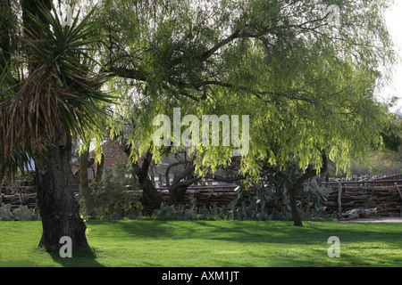 A beautiful scene with late afternoon sun shining through the tree branches. - Stock Photo