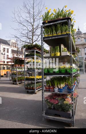 Market stall stock of flowering spring flower bulbs in the Grote Markt (Market Square) Antwerp, Belgium. - Stock Photo