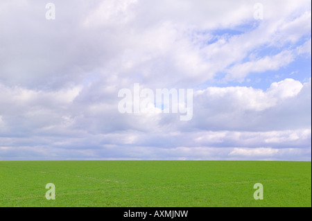 Green field and cloudy sky on a beautiful bright day the grass is nice and fresh after a rain shower - Stock Photo