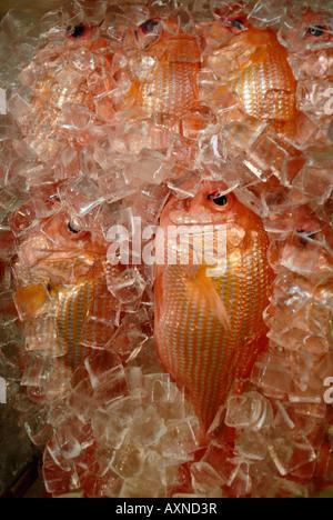 Fresh fish on ice for sale in Chinatown, Honolulu, O'ahu, Hawaii - Stock Photo