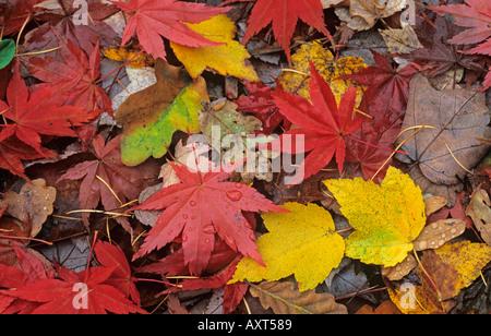 Fallen Leaves Autumn - Stock Photo