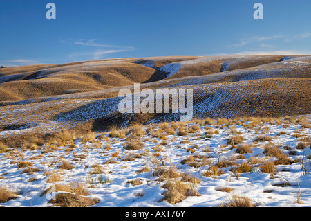 Tussock and Snow on Hills beside the Pigroute Highway Maniototo South Island New Zealand - Stock Photo