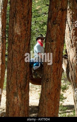 Cowboy on horse - Stock Photo