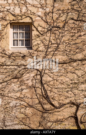 Ivied covered wall with a window in a french monastery wall - Stock Photo