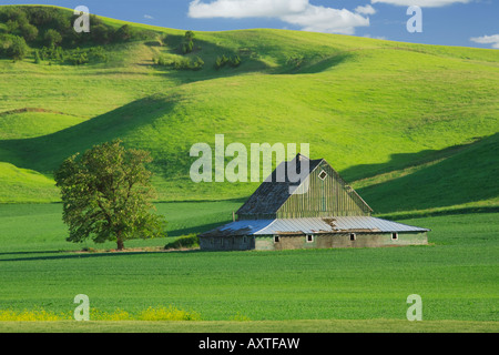 Barn in Palouse area of eastern Washington state - Stock Photo