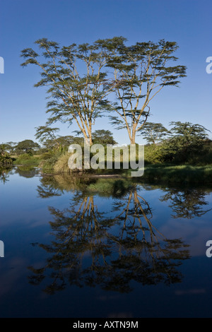 Perfectly reflected acacias in the gentle sun on the Serengeti National Park, Tanzania - Stock Photo
