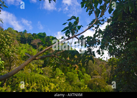 Looking out from between the Trees in Parque Nacional Volcan Baru Panama - Stock Photo