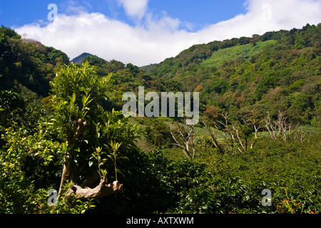 Looking up a on of the many Volcanic peaks in Parque Nacional Volcan Baru near Boquete Panama - Stock Photo