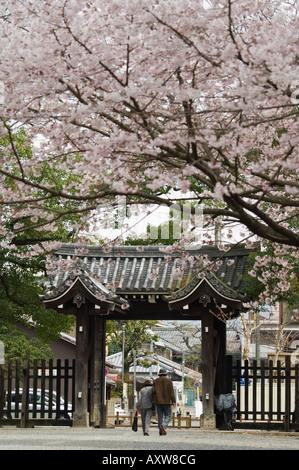 Old couple walking through gate under spring cherry tree blossom, Kyoto, Japa, Asia - Stock Photo