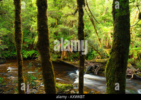 Rainforest and Surprise River, Franklin-Gordon Wild Rivers National Park, Tasmania, Australia, Pacific - Stock Photo