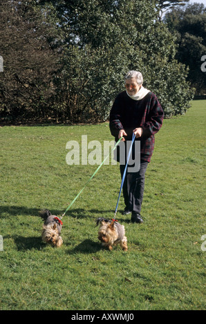 elderly woman walking her yorkshire terrier dogs in the countryside in wintertime - Stock Photo