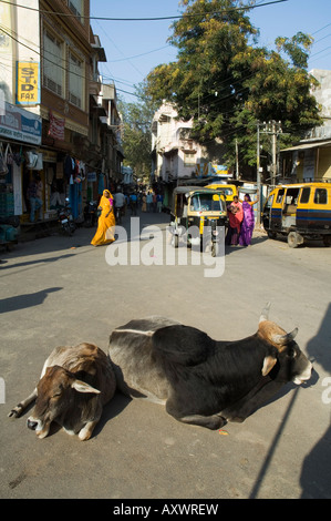 Holy cows on streets of Dungarpur, Rajasthan, India