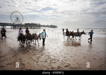 Donkeys giving rides to children on Blackpool beach in the UK - Stock Photo