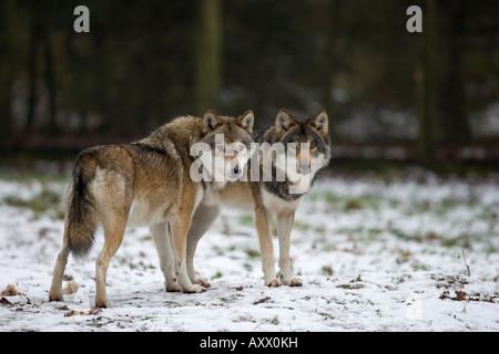 prey and predator relationship in scandinavia