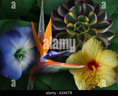 A Floral design. - Stock Photo