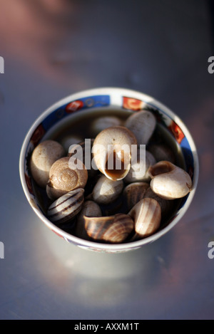 Eating snails in Place Djemaa el Fna market in Marrakech Morocco - Stock Photo