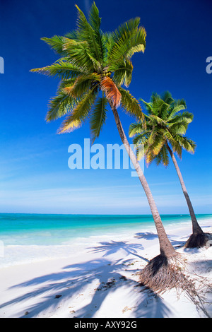 Palm tree, white sand beach and Indian Ocean, Jambiani, island of Zanzibar, Tanzania, East Africa, Africa - Stock Photo