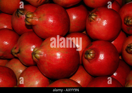The Pomegranate (Punica granatum) is a fruit-bearing deciduous shrub or small tree growing to 5–8 m tall. - Stock Photo