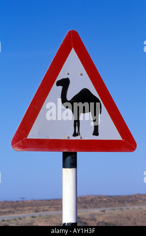 Beware of camels road sign near Salalah Dhorfar Oman - Stock Photo
